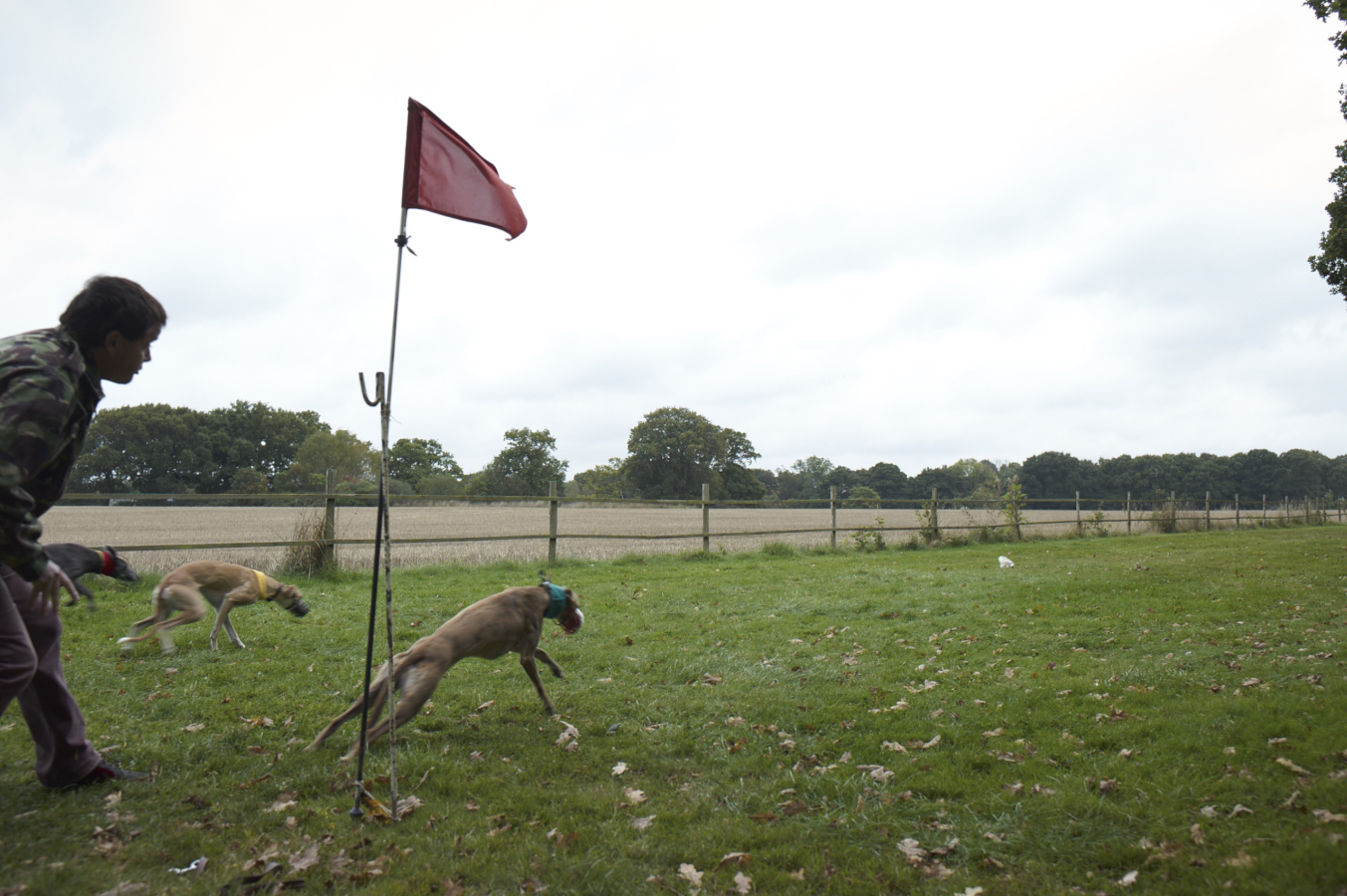 sussex_longdogs_L1006069.jpg